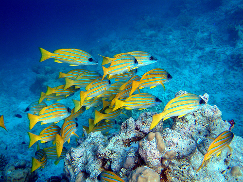 maldives12_underwater_world